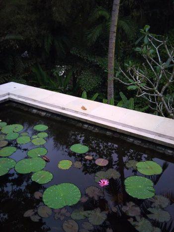 2011-10-01 06.38 蓮 小