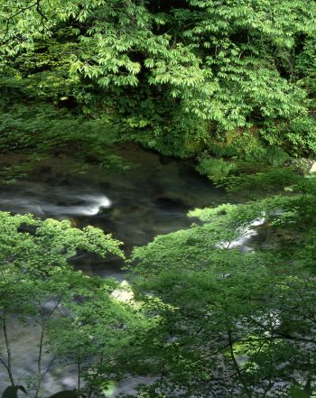 清滝川風景1jpg